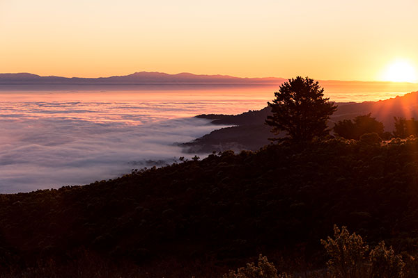 Jack Lucas - Silky Sunrise - Windy Hill Open Space Preserve