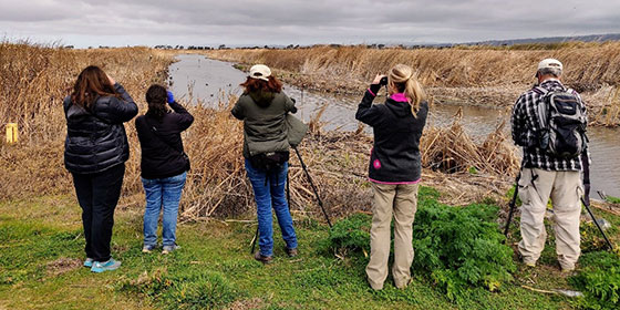 birdwatchers with binoculars along a waterway
