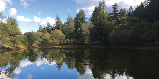 Upper pond at Bear Creek Redwoods