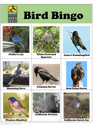 bird bingo card