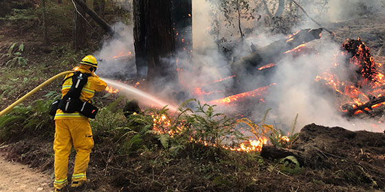 firefighter spraying water on burning tree