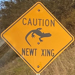 Caution Newt Crossing sign