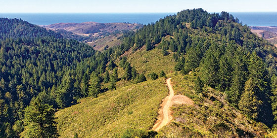 The view from Purisima Creek Redwoods preserve to the Pacific Ocean. © Haley Edmonston