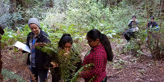 Students studying sword ferns