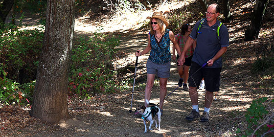 Hikers and their dogs can enjoy the trails at many Midpen preserves