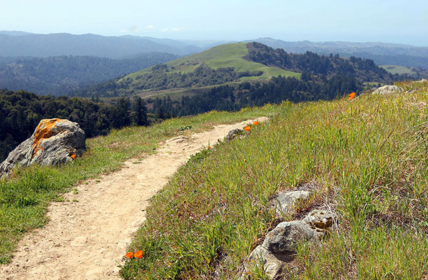 Russian Ridge Preserve Preserves
