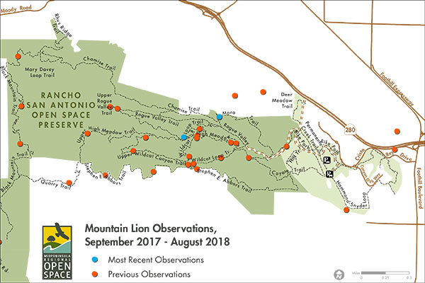 Mountain Lion Observations