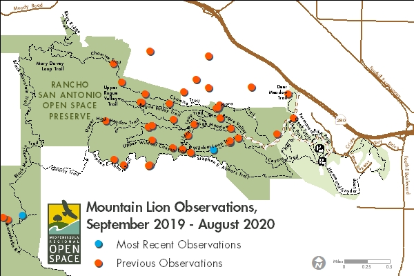 Mountain lion observations at Rancho San Antonio