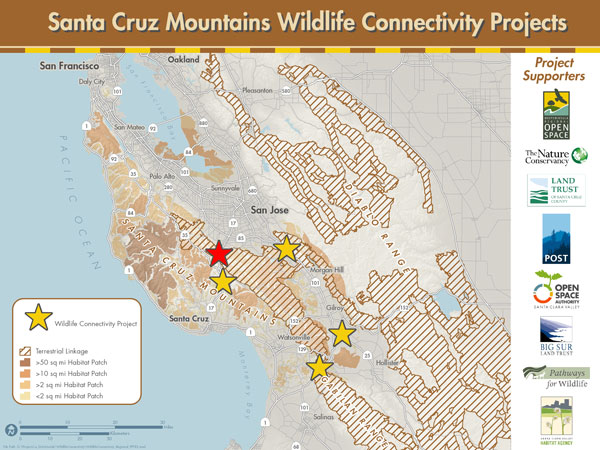 Santa Cruz Mountains Wildlife Connectivity Projects