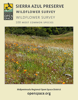 Wildflower Guide cover