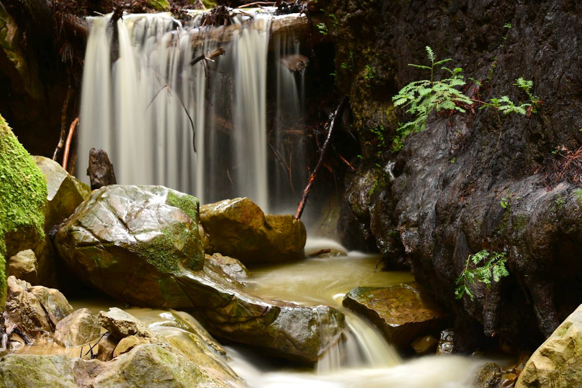 Waterfall on Dennis Martin Creek, Thornewood Preserve, by David Henry