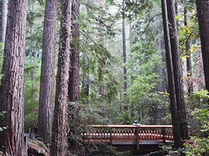 Under construction: A new trail and bridge over Webb Creek in Bear Creek Redwoods Open Space Preserve