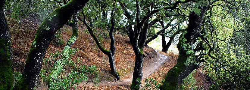 Pulgas Ridge Preserve Midpeninsula Regional Open Space